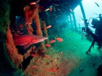 Ethan Enters the Shark Room on the Aeolus